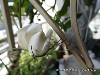 Photos: DSC00450