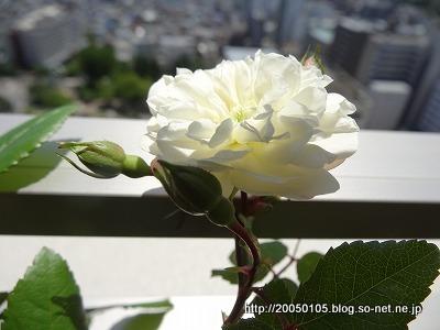 Photos: DSC00636