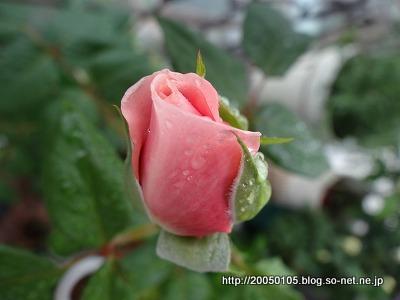 Photos: DSC00905