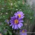 Photos: DSC01466