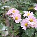 Photos: 寒そう~