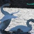 Photos: 若鳥の羽ばたき
