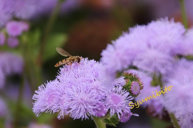 この花は? そしてこの蜂は?