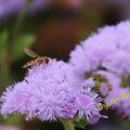 Photos: この花は? そしてこの蜂は?