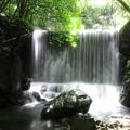 大樽の滝 渓流沿い
