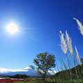 Photos: 『颯』 ~大石公園~