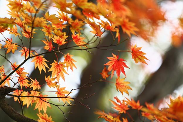写真: 『秋彩。。。』