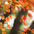 Photos: 『秋彩。。。』