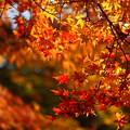 写真: 『燃秋。。。』