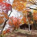 写真: 『天高く燃ゆる秋』