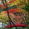 写真: 『五色の秋。。。』