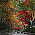 写真: 『流れ行く秋。。。』