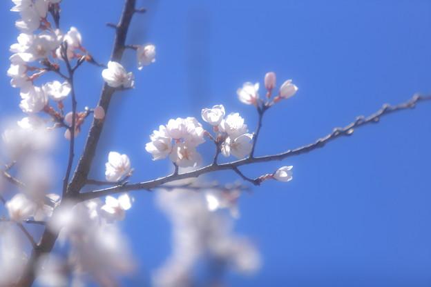 写真: 『春麗。。。』
