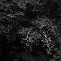 Photos: 『如法暗夜』