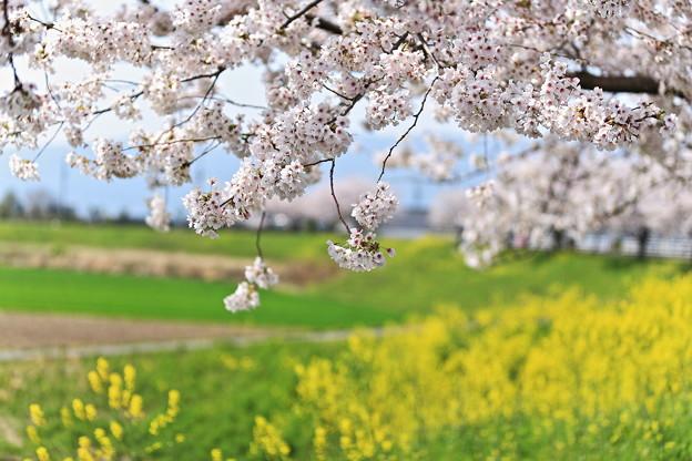 写真: 『優春。。。』
