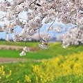 『優春。。。』