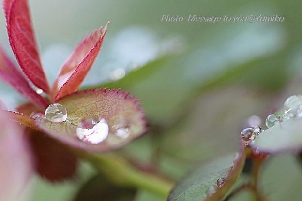 雨のあとの宝石