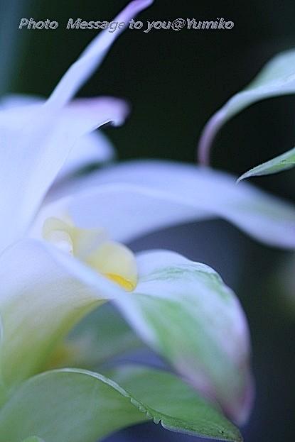 FLOWER  UKON