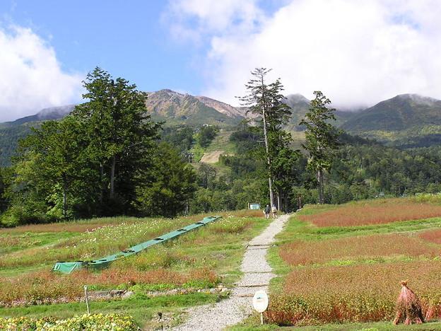 木曽御嶽山帰りロープウェイ乗り場より025
