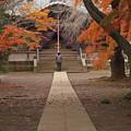 写真: 晩秋の候