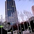 写真: 神戸市庁舎は育ってます!?(笑)