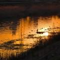 Photos: 眩く染まる川面
