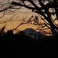 小山台遺跡公園からみた雑木林越しの富士山