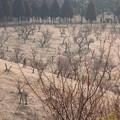 2月23日の石ヶ谷公園(兵庫県明石市)?
