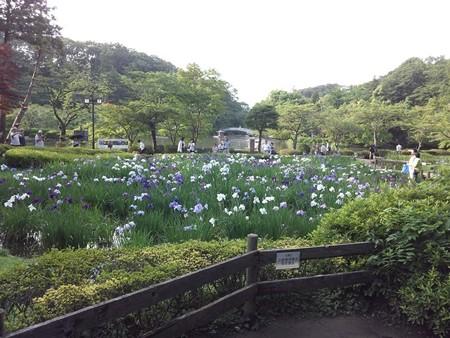 花ショウブと薬師池