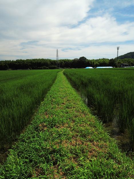 Photos: 田んぼの中の一本道