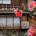 祇園に咲いていた花