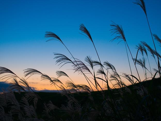 Photos: 宵の風