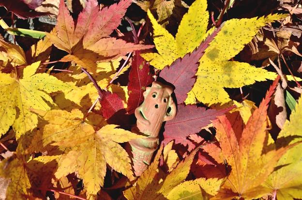 写真: 落葉。