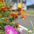 Photos: ローカル線の花壇-1-