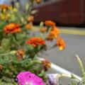 Photos: ローカル線の花壇-2-
