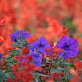 Photos: 公園に咲いていた花-3-