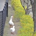 Photos: 春のおさんぽ