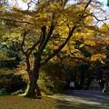 金鎖神社の秋