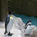 @nyanti315 東山動物園のペンギンさんー。イワトビペンギンも可愛いです(^...