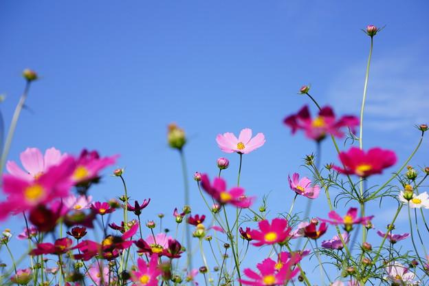花よりつぼみ