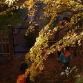 写真: 思い出は秋色