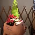 Photos: クリスマスの鉢