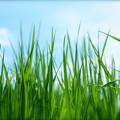 写真: 草原