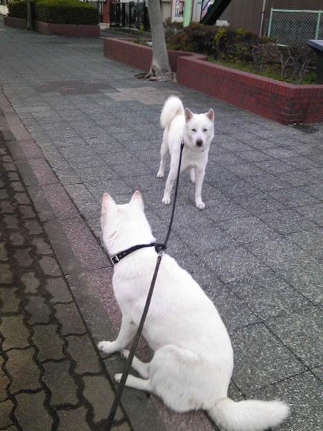 写真: 散歩済ませた。タガラガワ暗...