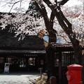 Photos: 桜の風景