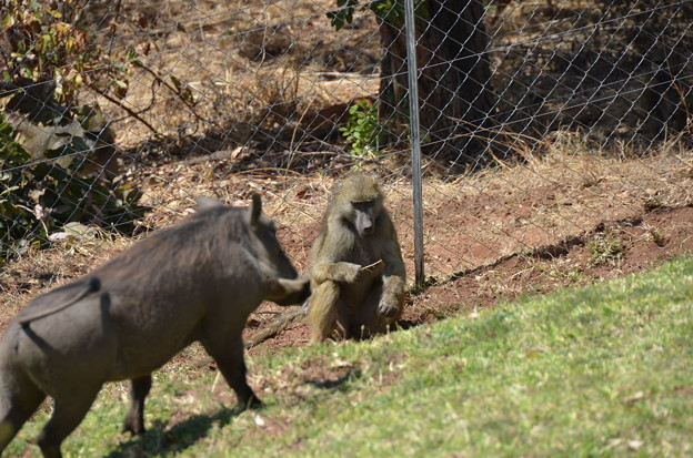 周辺はサルとか猪?とかが普通に闊歩しています