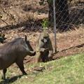 写真: 周辺はサルとか猪?とかが普通に闊歩しています