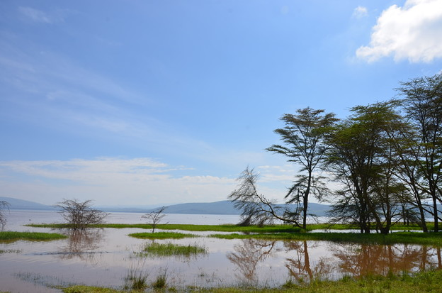 写真: ナクル湖
