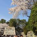 写真: 名古屋城春まつり - 051