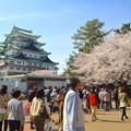 写真: 名古屋城春まつり - 053